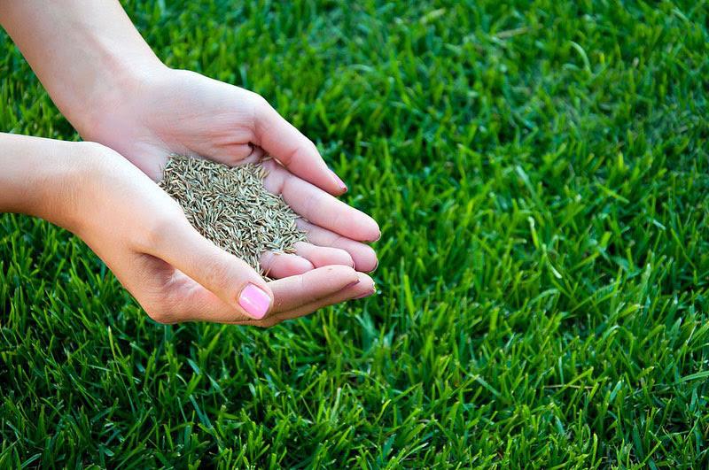 Trộn hạt giống với đất sạch và cát
