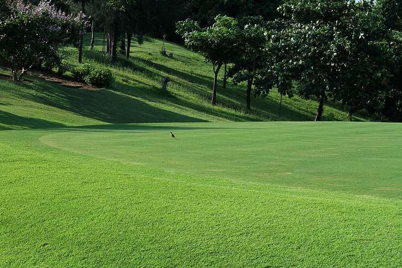 Vẻ đẹp thu hút mọi ánh nhìn của sân golf Paradise
